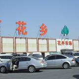 北京花乡花卉市场