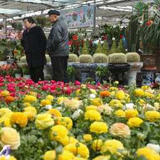沈阳市育才花卉市场