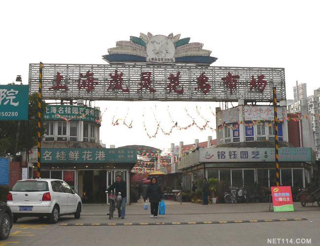 上海盆栽花卉市场_上海岚灵花鸟市场 -中国花木交易市场