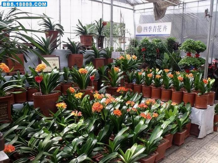 天津曹庄花卉市场 -中国花木交易市场