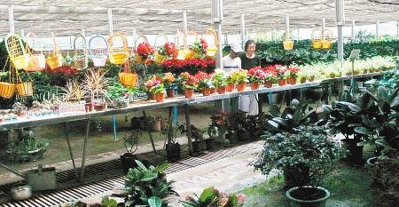 鲜花批发市场_西安朱雀花卉市场 -中国花木交易市场