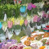 榆中县定远镇猪咀岭村花卉批发市场