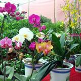 拉萨百花园花卉市场开业
