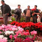 青海刘家寨绿馨花卉市场