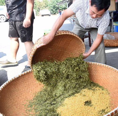 杭州:桂花龙井茶上市了