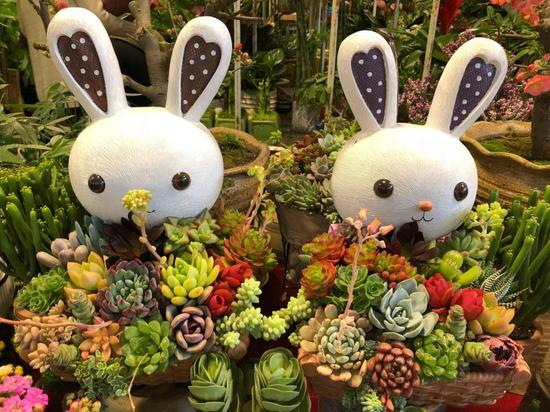 上海:花市缺乏引导