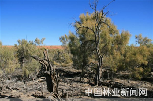 网络植树的热点树种