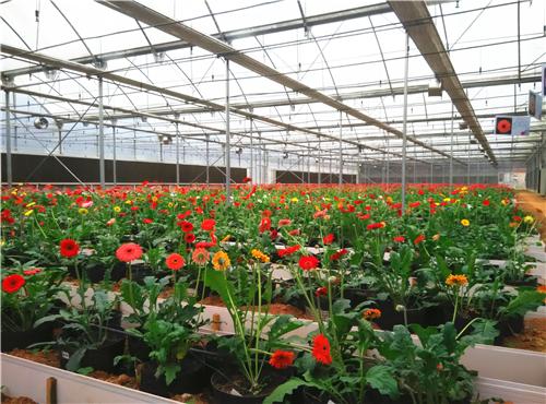 福建将重奖花卉苗木新品种选育者