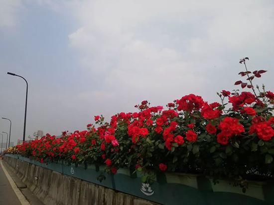 杭州高架上的花架被惊呆 太奢侈了
