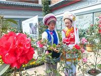 云南大理花卉产业发展再创新高