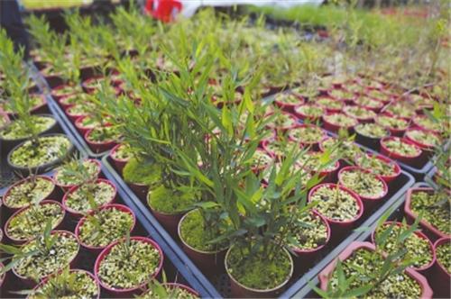 姬翠竹:欲以竹之名打造绿植市场新当家