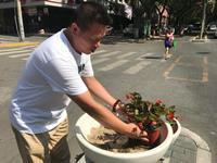 """西安:和平路街景盆栽屡遭""""黑手"""""""