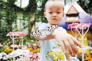 昆明:到黑龙潭公园乐享花海景观