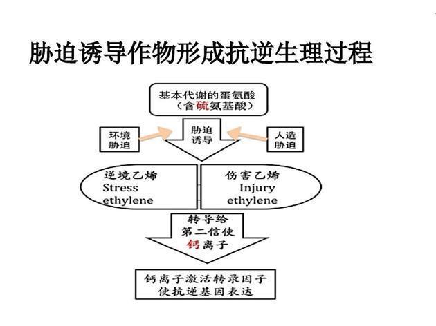 中草药制剂的杀菌剂与植物次生代谢的关系
