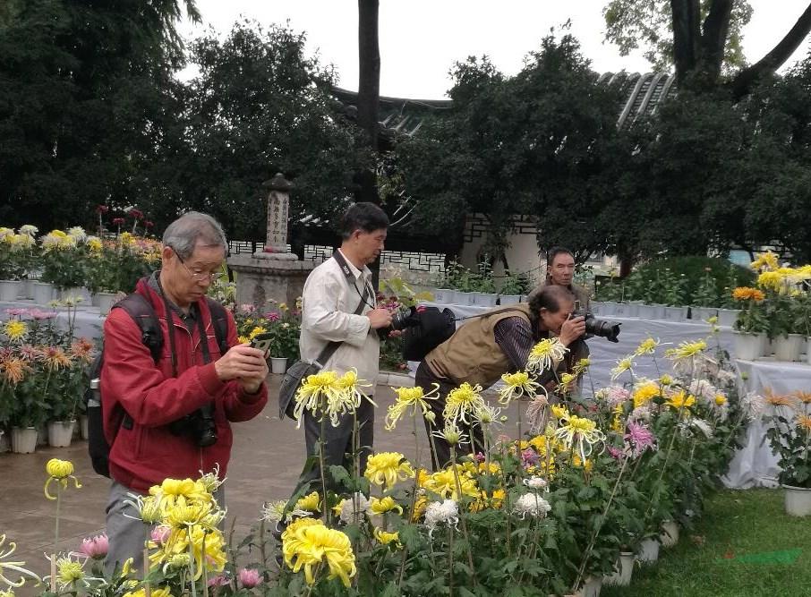 昆明大观公园金秋菊展开展 400多种菊花激情绽放同台比美