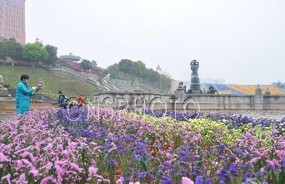 """长沙世界之窗20万朵鲜花造巨型""""花海""""祭先人(图)"""