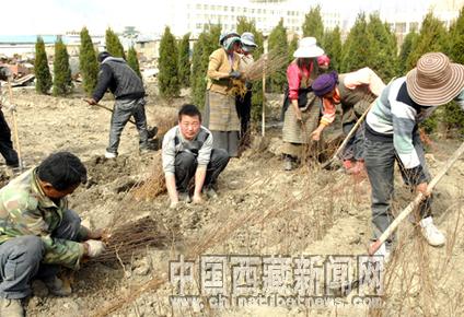 西藏对城市绿化和植树造林越来越重视(图)
