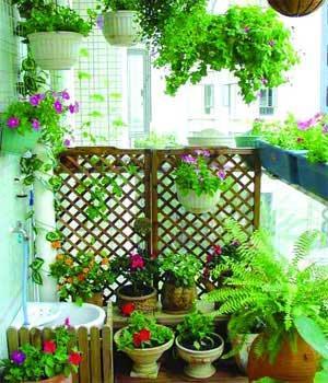 巧用园艺设计 3招让阳台变成温馨小花房