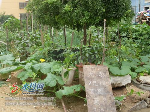 烟台:清泉寨一居民毁了楼前花园种菜 明码标价卖菜