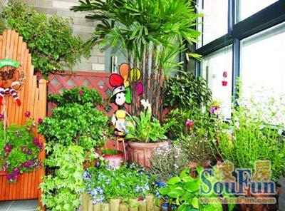 动动手阳台变身小花房 阳台面积小多栽爬藤植物(图)