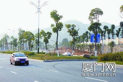 环岛干道黄厝段的道路绿化令人赏心悦目.