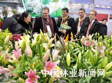 江苏举办年宵花卉展示展销会 - 园林资讯 - 中国园林网