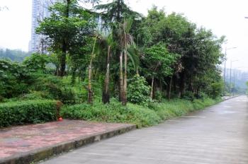 四川 市民不解 绿化带为啥 长 上了人行道 高清图片
