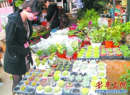 青岛:吸毒花卉市场热卖 功能被夸大(图)