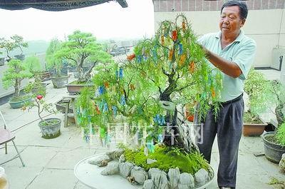养花人故事 老杨和他的屋顶盆景园