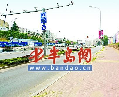 """青岛:行道树到底该如何栽种 市民认为""""梧桐树""""合适"""