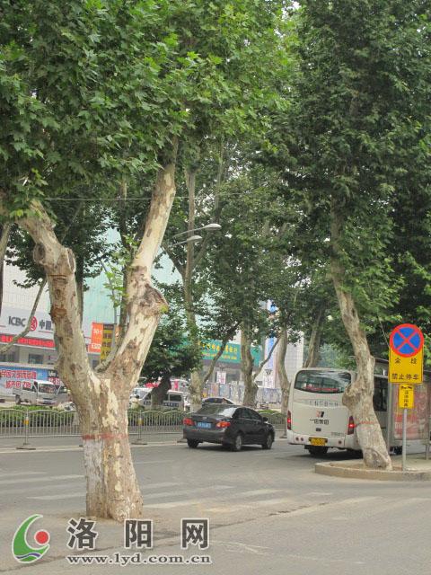 榕树园林小景手绘