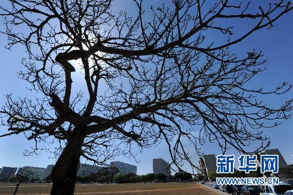 树下落叶遍地 通化:泥石流冲倒大树险压民房 消防伐树解忧