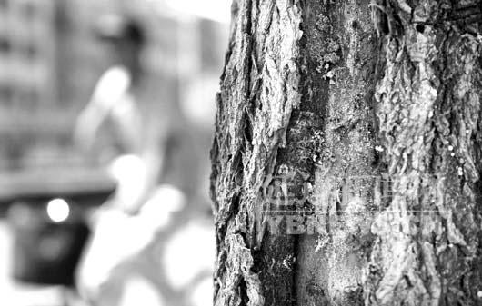 干上布满虫眼,数不清的黑色小虫子在上面爬来爬去,树皮已经剥离树干