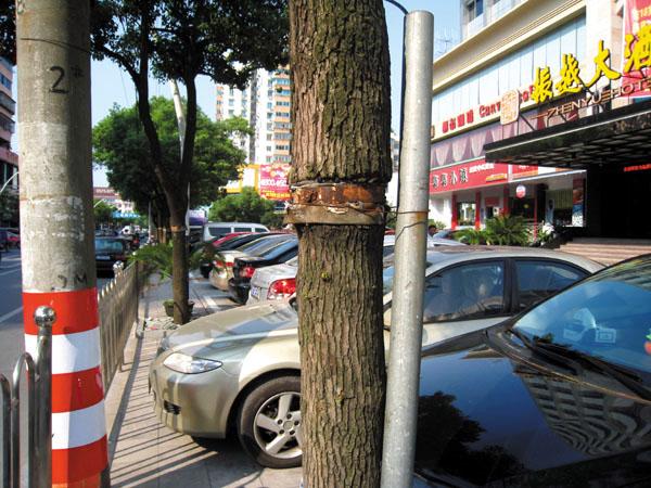 资讯生活诸暨:这些可怜的树 看着让人心疼
