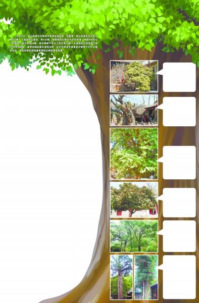 据崂山林场场长董志顺介绍,崂山风景区此次古树名木普查,是继1989年