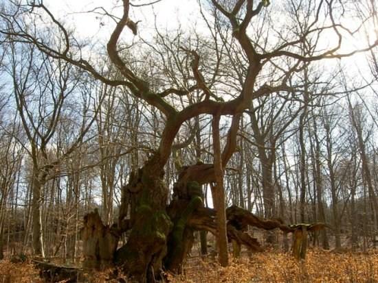 盘点地球上最老 最珍贵和最庞大的树木