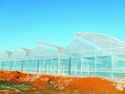 华南地区温室构造与降温措施