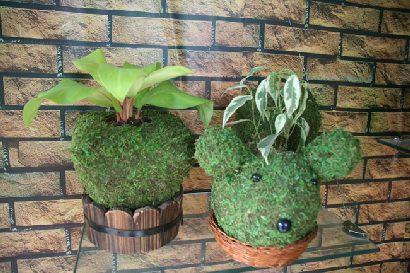 观叶植物及其他热带花卉,而贵州南部的气候尤其适宜这种苔藓的生长.