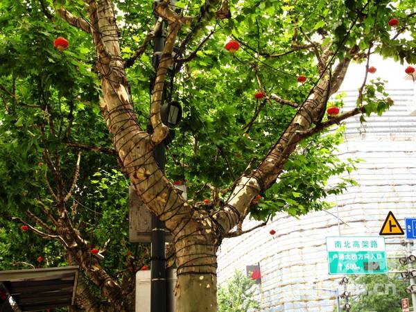 行道树装饰