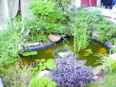 水景也是花园不可或缺的组成元素;