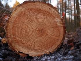 树木/中国园林网8月1日消息:树木年轮对于获取过去的气候信息具有...