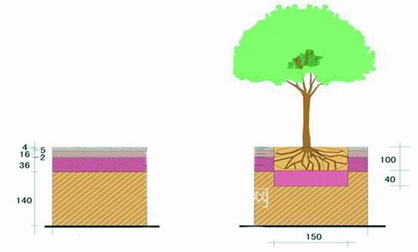 大树的结构示意图