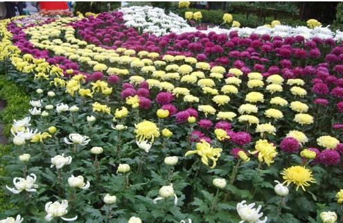 国内资讯 > 正文   中国园林网10月10日消息:葫芦岛市第二届菊花艺术