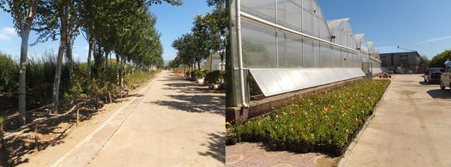 内蒙古:鸿盛花木基地圆满完成树木花卉培育工作任务