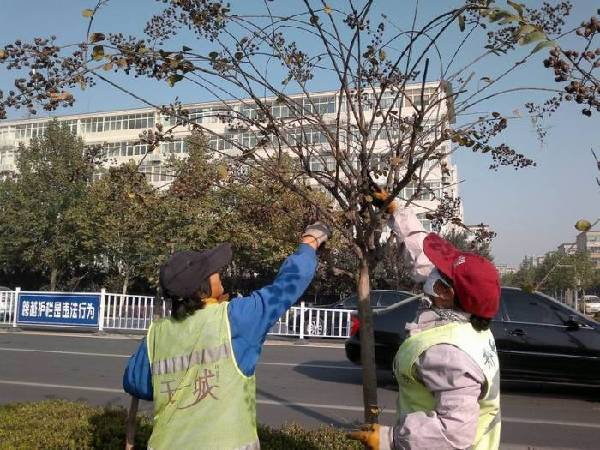 通过修剪可解决树木生长与架空线路及交通,遮挡居民采光之间的矛盾,也