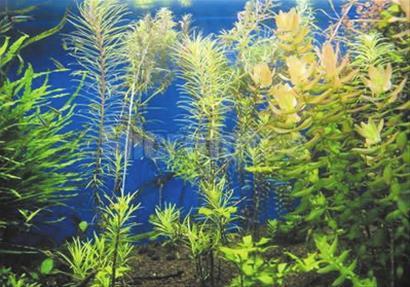 """山东:青岛海底森林将首次""""现身""""世园会"""
