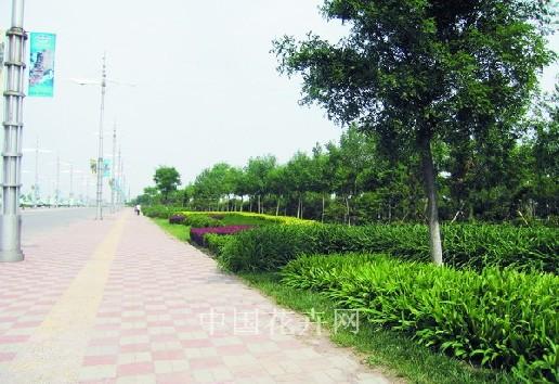 天津航母公园吹填土绿化