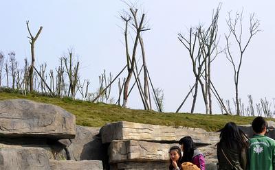 四川南充:北塔公园二; 白塔公园二期 景观树木成片枯死?
