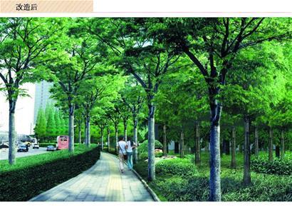 青岛:前海打造多层次景观道 见缝插绿种乔灌木