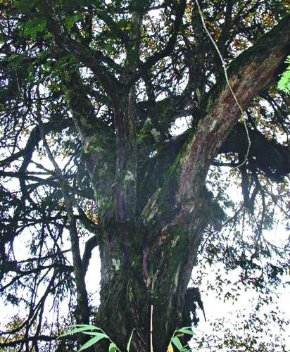 成都乡土树种濒危 拟建 种子库 保护稀有树种